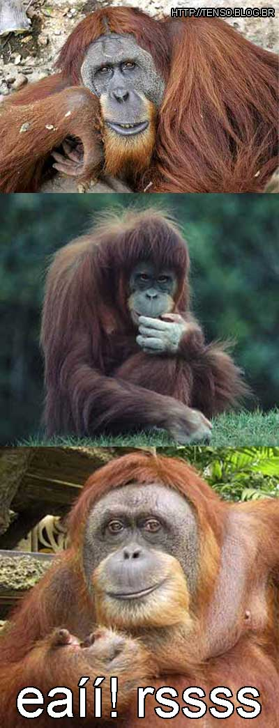orangotangooos