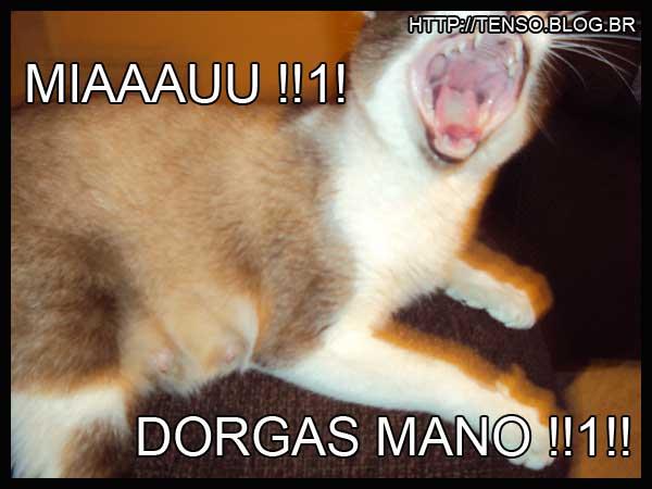 dorgas-kate-barbara