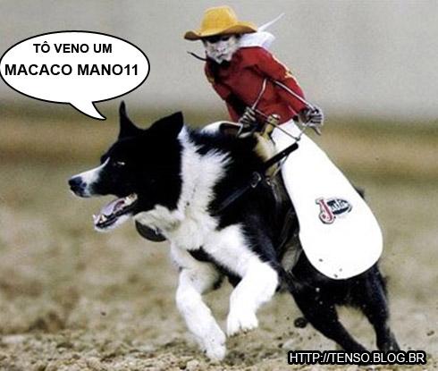 macaco2