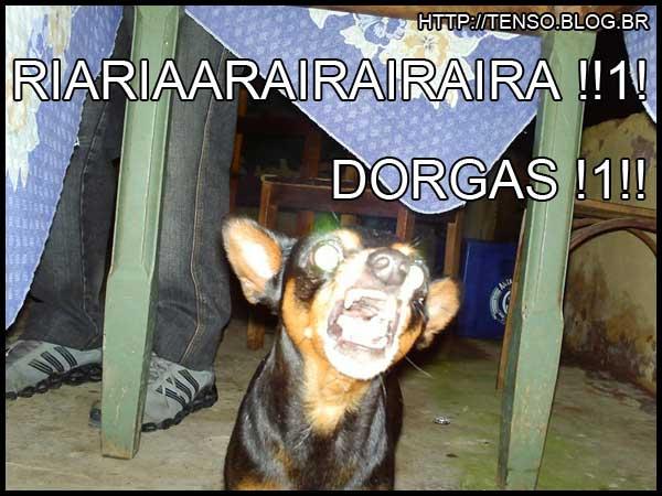 dorgas_isabela