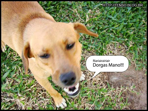dorgas_thejoao