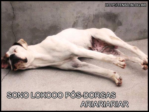dorgas_bianca