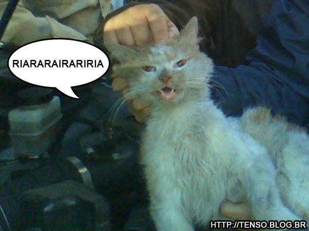 gatoc