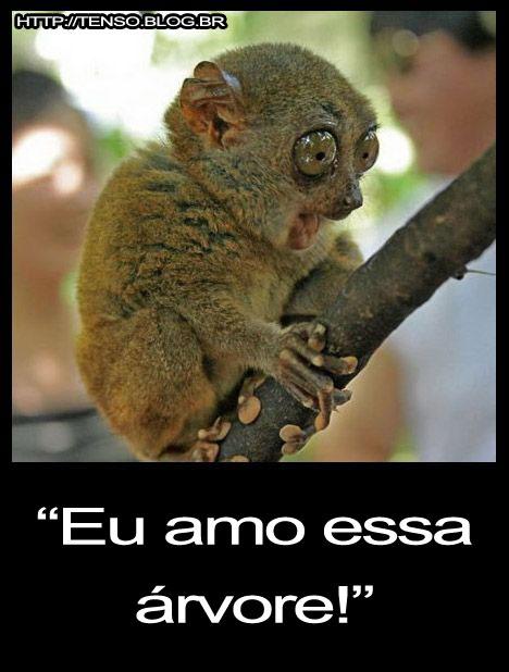 lemurearvore