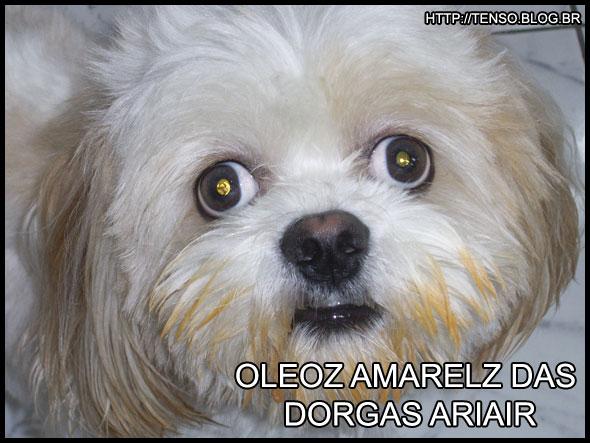 dorgas_daniel