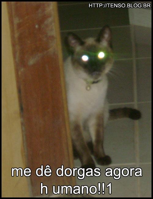 dorgas_with_laser-thiago