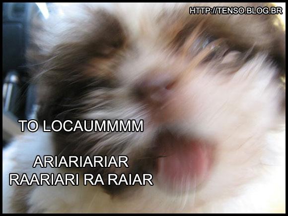 dorgas_camila