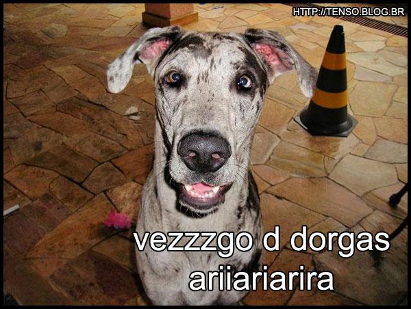 dorgas_renato