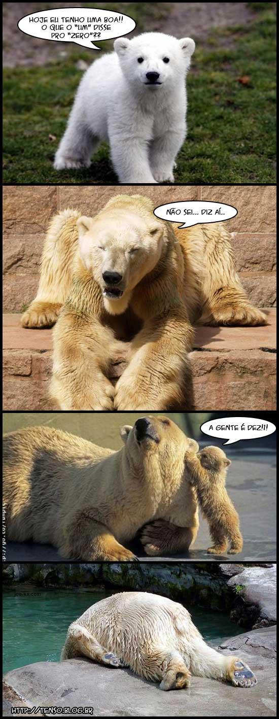 Topico de imagens toscas e/ou insanas - Página 17 Urso_dez