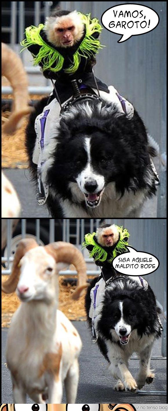 macaco-maligno