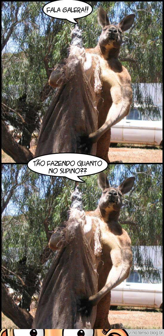 canguru_de_academia