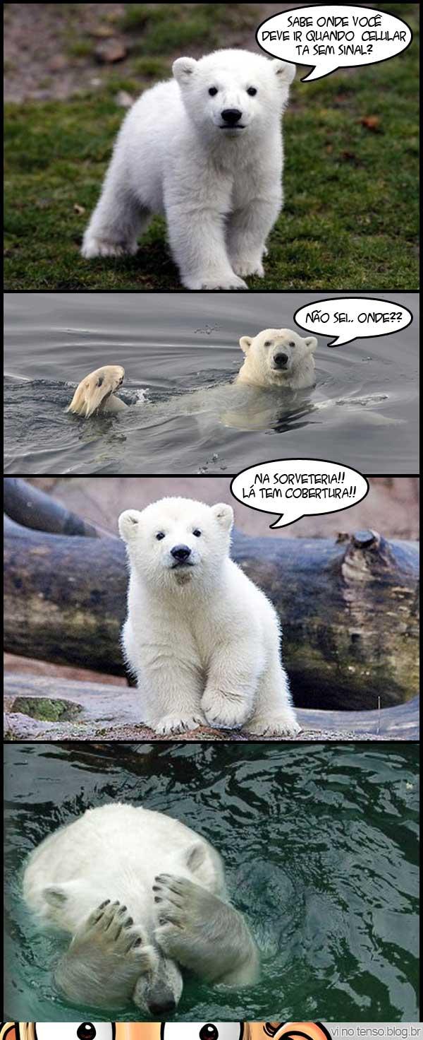 urso_sorveteria