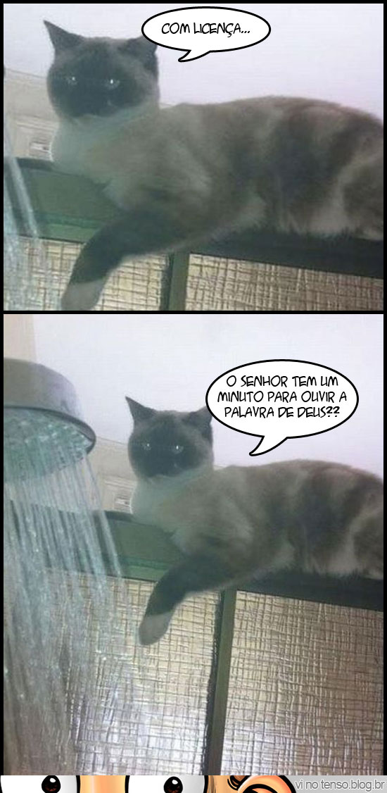 gato_pastor_deus