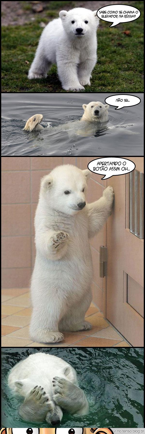 urso_russia_elevador