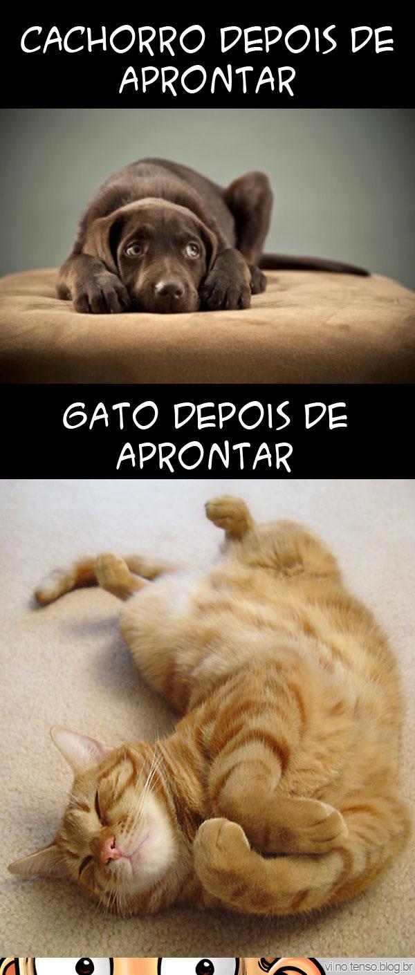 gato_cao