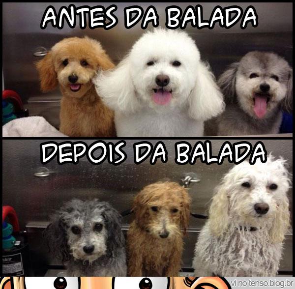 cadelas