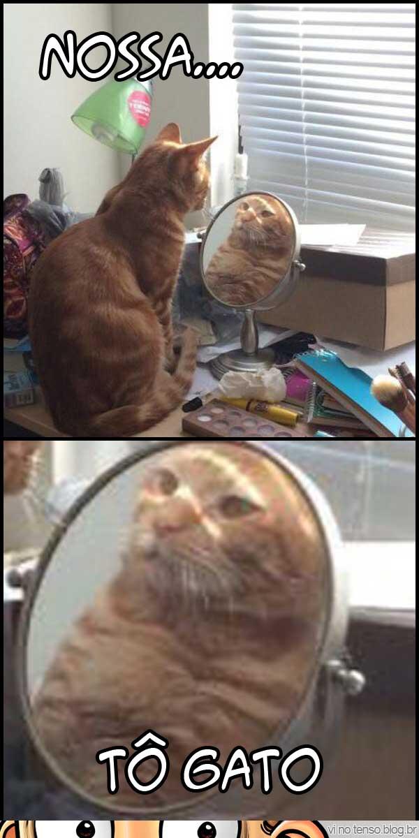 to-gato