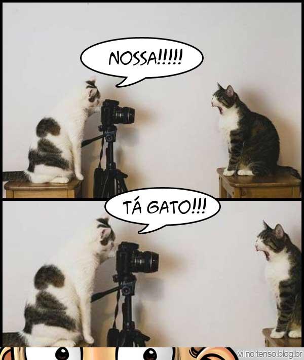 ta-gato